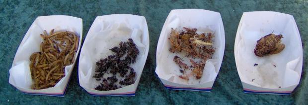 Larver og græshopper... som man kunne smage i Zoo